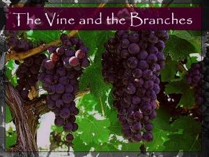 vineandbranches