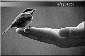 witnessbird