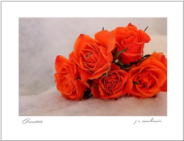 Coronation flowers