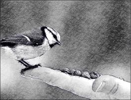 sparrow seeds