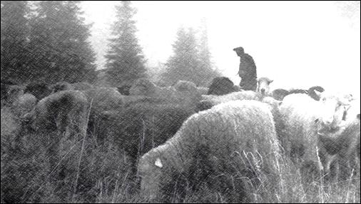 VOICE OF THE SHEPHERD