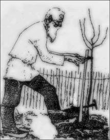 OLD MAN PLATING TREE